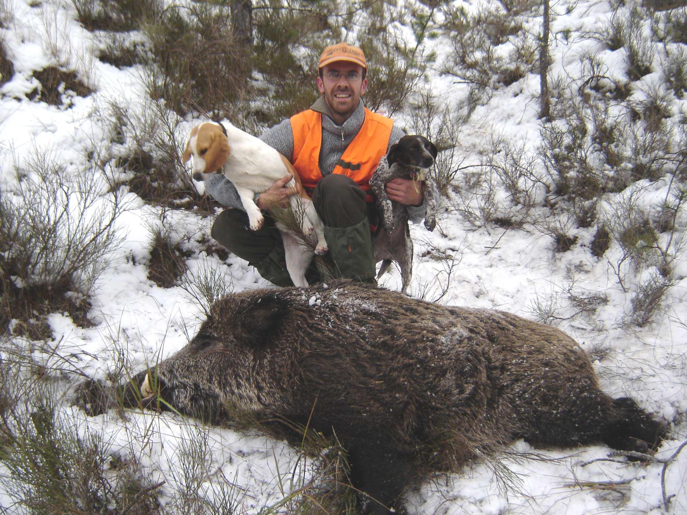 Chien de chasse au sanglier a vendre : trouvez le meilleur